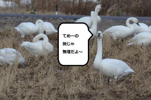 DSC_6184.JPG
